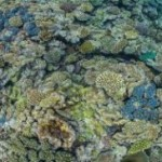 How do you save a sick coral reef? Pop an antacid
