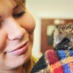 Wildlife charity sees surge in prickly customers this winter